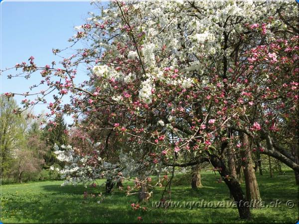 Stromy vedia počuť, cítiť radosť, úzkosť, zúfalstvo i bolesť